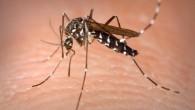 Come tutti gli anni è stata pubblicata sul sito del Comune di Roma l'Ordinanza del Sindaco riguardo la lotta alla zanzara tigre (aedes albopictus), che rendiamo disponibile per il download […]